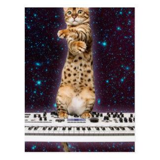 gato do teclado - gatos engraçados - amantes do cartão postal