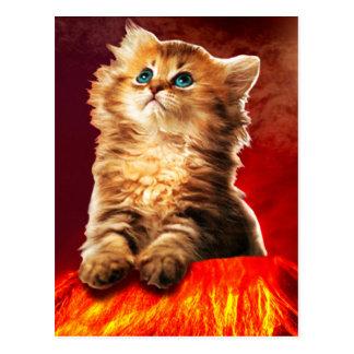 gato do vulcão, gato vulcan, cartão postal