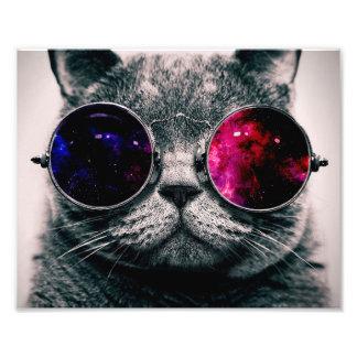 gato dos óculos de sol impressão de foto
