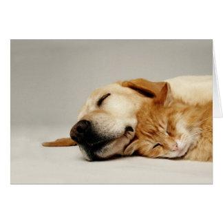 Gato e cão que dormem junto… cartão