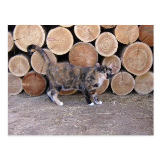 Gato e cartão do woodpile