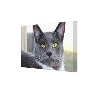 Gato em canvas