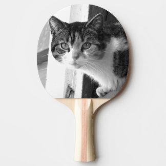 Gato em preto e branco raquete de ping pong