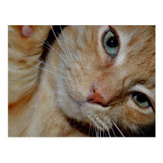Gato engraçado cartão postal