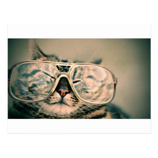 Gato engraçado com vidros cartão postal
