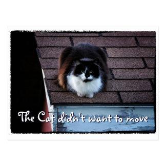 Gato engraçado do smoking em anúncio movente do cartão postal