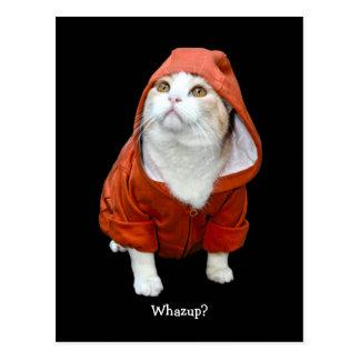 Gato engraçado Whazup? Cartão Postal