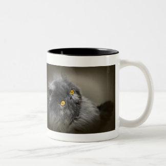 Gato escuro macio com olhos alaranjados caneca de café em dois tons