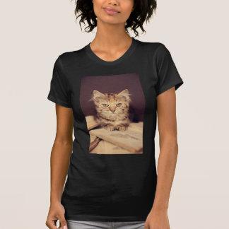 gato esperto tshirts