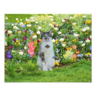 Gato Eyed azul entre as flores Impressão De Foto