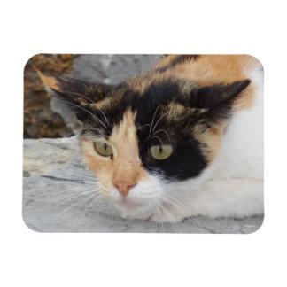 """Gato focalizado 3"""""""" ímã x4 foto com ímã retangular"""
