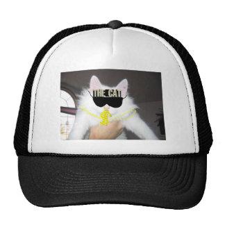 gato legal boné
