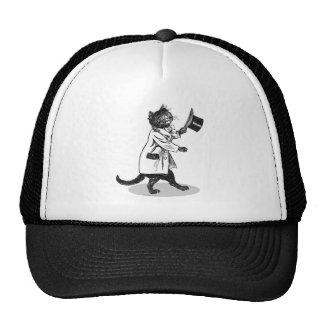 Gato legal do chapéu alto boné