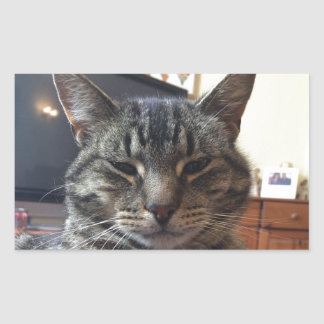 Gato listrado adesivo retangular