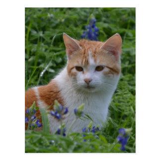 Gato malhado alaranjado e branco cartão postal