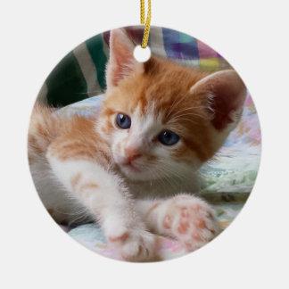 Gato malhado alaranjado & ornamento branco do
