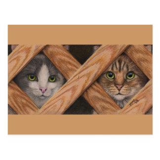 Gato malhado cinzento dos gatos atrás do cartão da