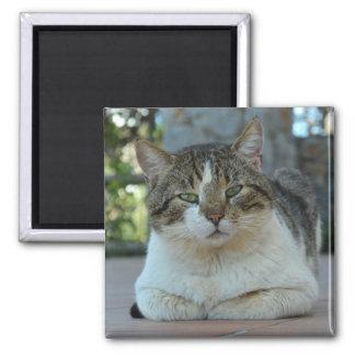 Gato malhado e ímã branco do gato imã