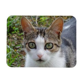 "Gato malhado/gato branco 3"""" ímã x4"