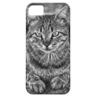 Gato malhado impressionante na capa de telefone