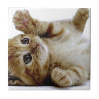 gato malhado pequeno bonito do gengibre do animal