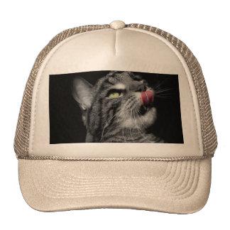 Gato maravilhoso boné