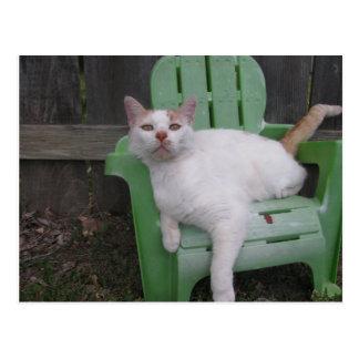 gato no cartão da cadeira