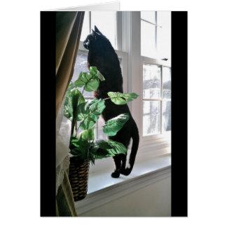Gato no cartão de nota da janela