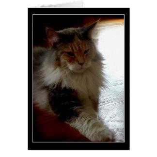 Gato no cartão ensolarado da foto da janela