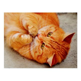 Gato pequeno peluches - impressão bonito do cartão postal