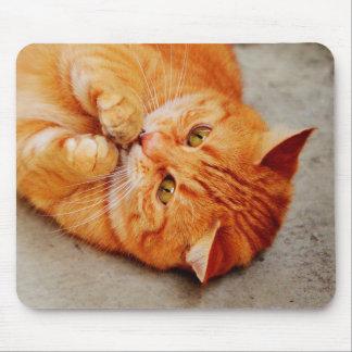 Gato pequeno peluches - impressão bonito do mouse pad