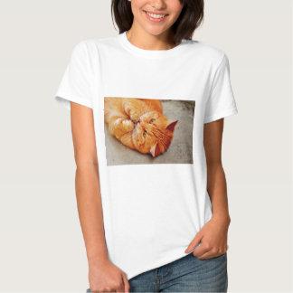 Gato pequeno peluches - impressão bonito do t-shirt