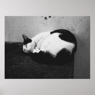 Gato preto & branco pôster