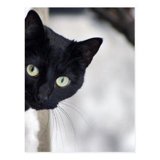 Gato preto cartão postal