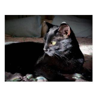 Gato preto em um cartão da cama
