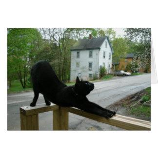 Gato que faz o cartão da ioga da manhã