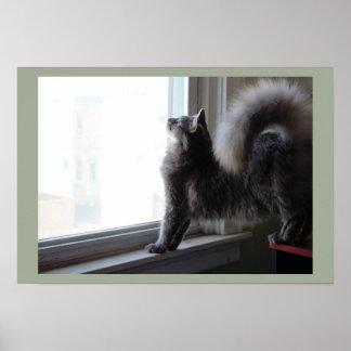 Gato que olha para fora a janela poster