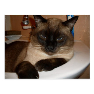 Gato Siamese no cartão do dissipador