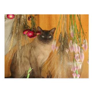 Gato Siamese que levanta o cartão animal #3 da