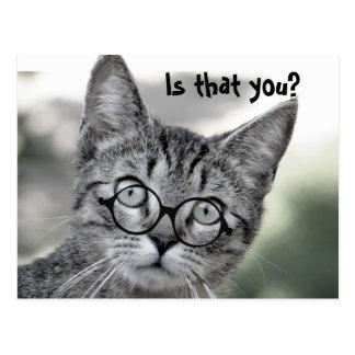 Gato surpreendido bonito com cartão dos vidros
