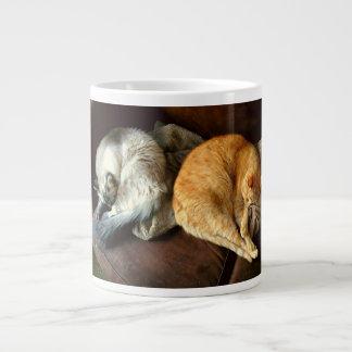 Gatos calmos na grande caneca