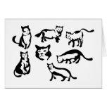 Gatos Cartao