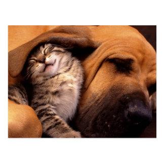 Gatos e cães cartão postal