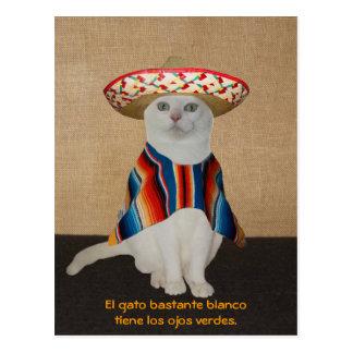 Gatos engraçados nos Sombreros para o divertimento Cartão Postal