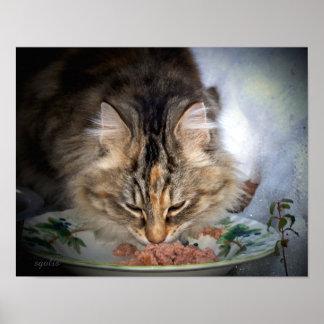 Gatos ferozes da alimentação um poster do inverno