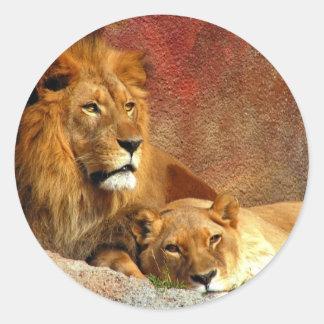 Gatos grandes - 6 adesivo redondo