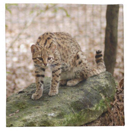geoffroy-cat-001 guardanapo de pano