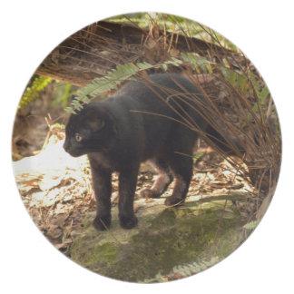 geoffroy-cat-005 prato