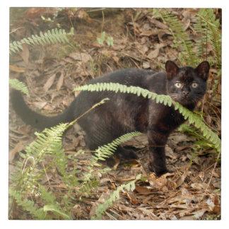 geoffroy-cat-007 azulejo