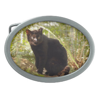 geoffroy-cat-010
